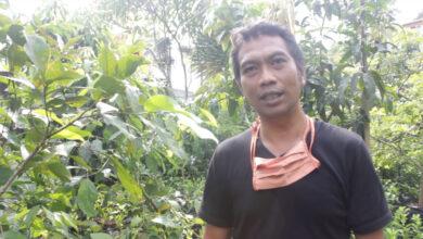 Photo of Cerita Sukses Cilengko Farm: Omset Naik hingga 300 Persen Saat Pandemi