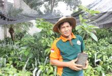 Photo of Aminudin Aziz, Pensiunan yang Sukses Usaha Pembibitan Alpukat Miki